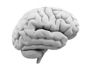Info-tabac amincit cortex cérébral