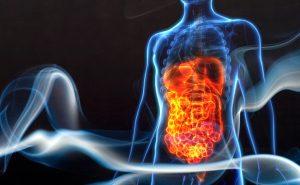 Système digestif humain et fumée